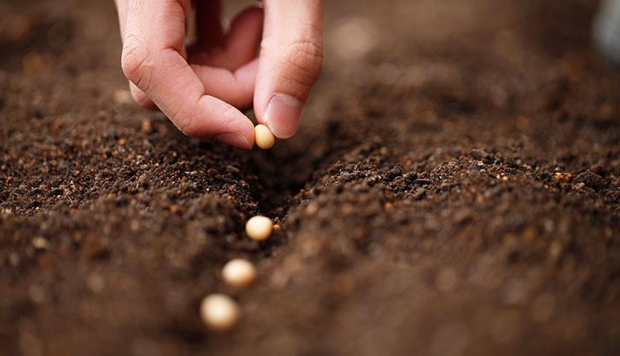 Soil fertility - Wikipedia | 500x870