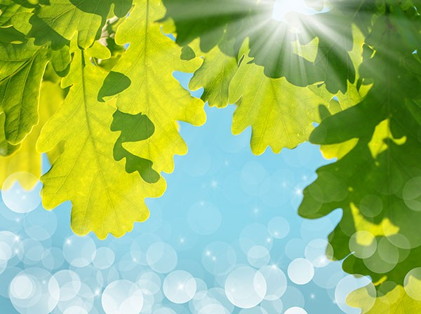Blog-Wat-is-fotosynthese.jpg